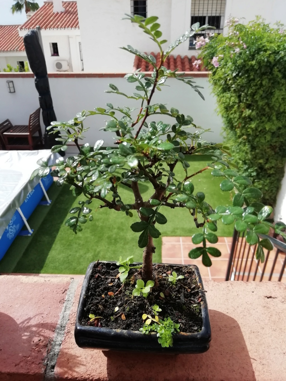 Ayuda con nuevo bonsai Img_2014