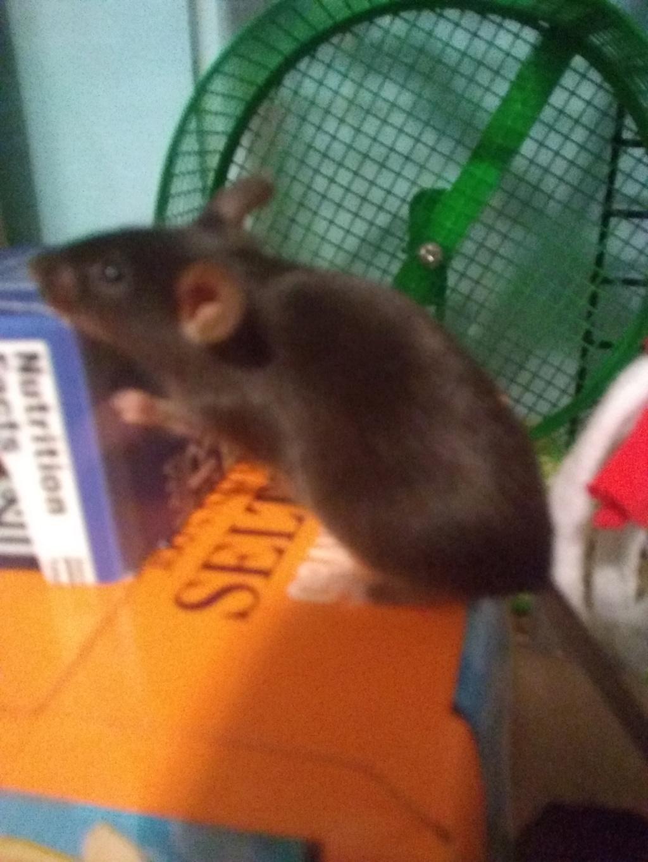 Meet my mice!!!! Img_2010