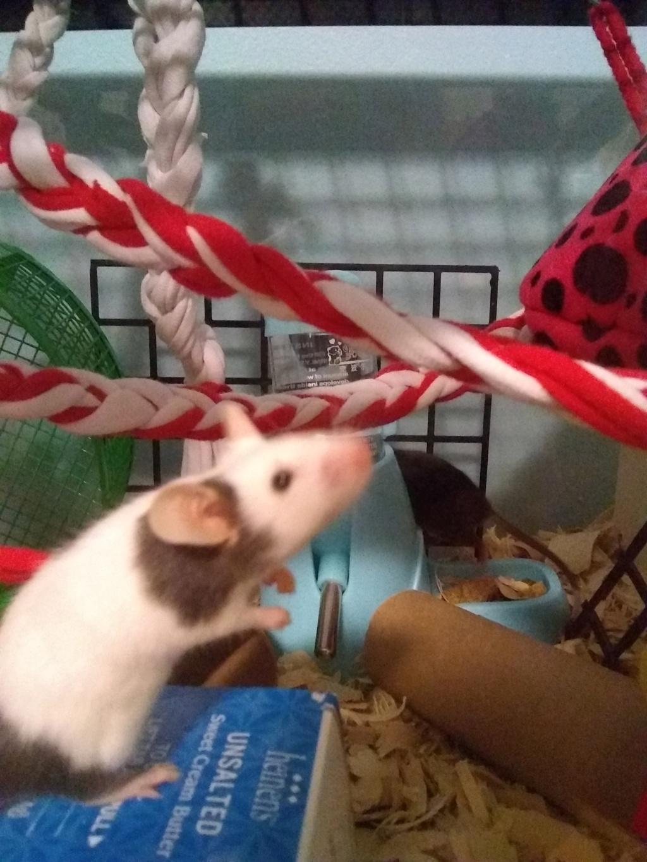 Meet my mice!!!! Img_2011