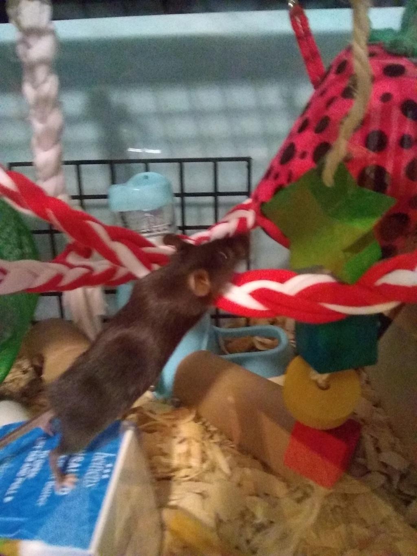Meet my mice!!!! Img_2012