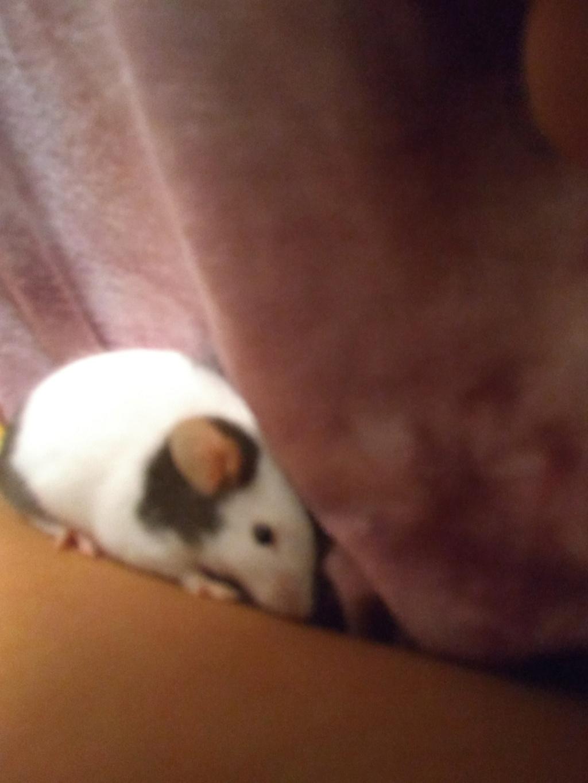 Meet my mice!!!! Img_2014