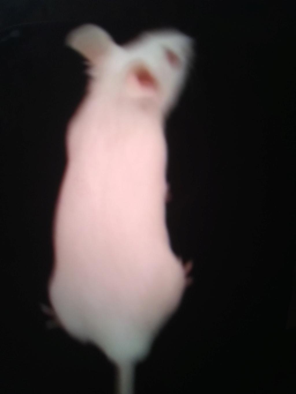 Meet my mice!!!! Img_2016