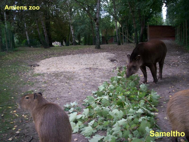 Le tapir terrestre (Tapirus terrestris) Parc_t10