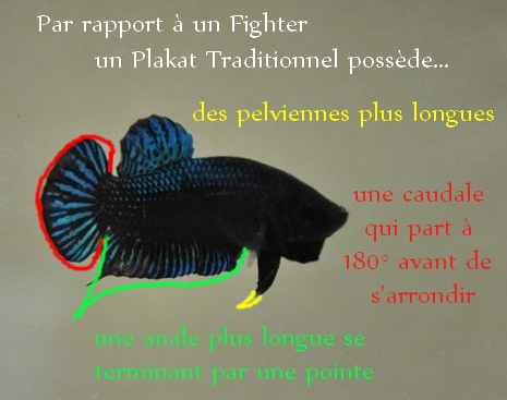 Différence Plakat traditionel et Plakat fighter  ?? Fighte10
