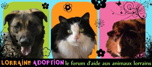 Lorraine Adoption