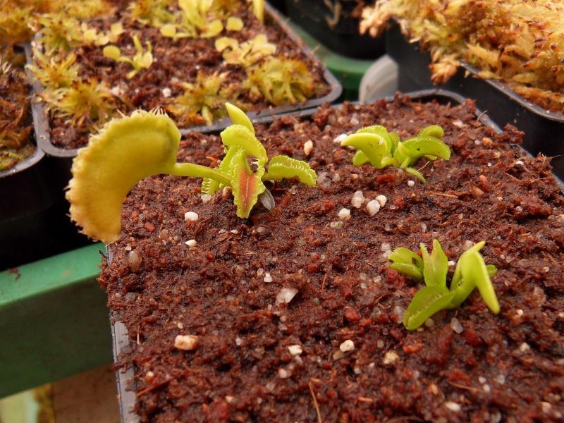 Rafale de nouveaux cultivars  Sdc14322