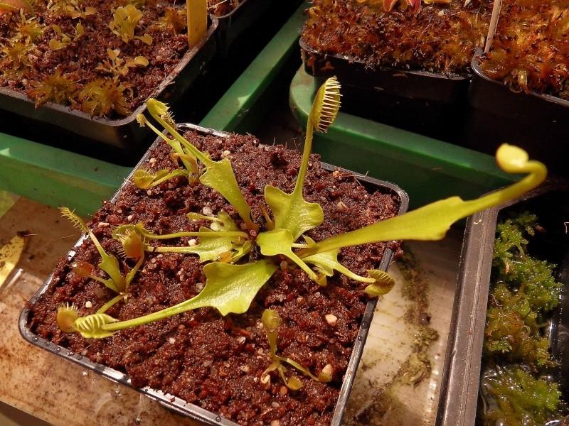 Rafale de nouveaux cultivars  Sdc14410