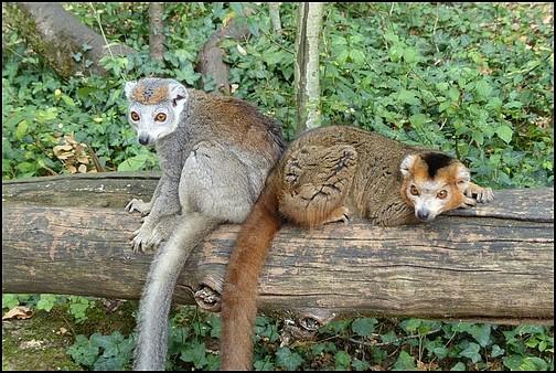 Reserve zoologique de Calviac 0027_l10