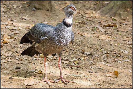 Reserve zoologique de Calviac 06_kam10