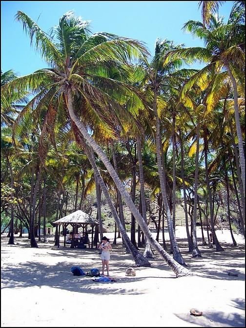 [Guadeloupe] Notre voyage de Noces 100_8031