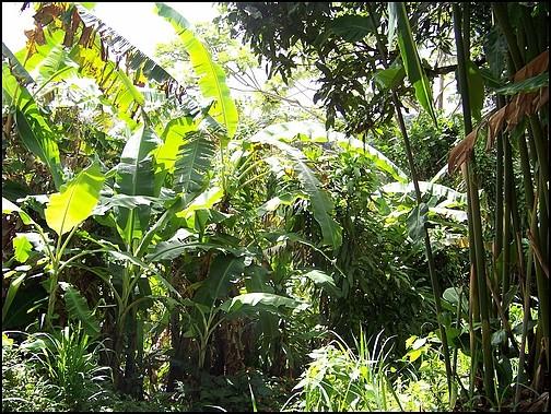 [Guadeloupe] Notre voyage de Noces 100_8119
