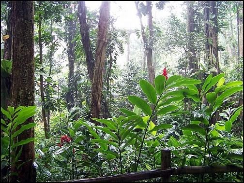 [Guadeloupe] Notre voyage de Noces 100_8216