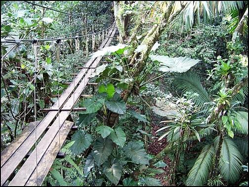 [Guadeloupe] Notre voyage de Noces 100_8317