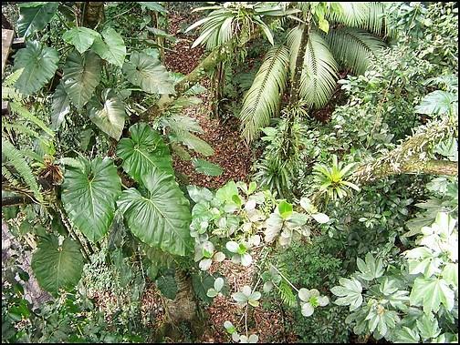 [Guadeloupe] Notre voyage de Noces 100_8318