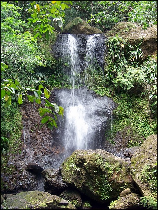 [Guadeloupe] Notre voyage de Noces 100_8722