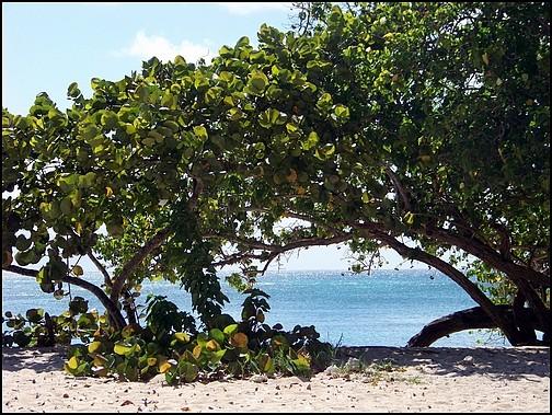 [Guadeloupe] Notre voyage de Noces 100_8811