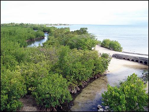 [Guadeloupe] Notre voyage de Noces 100_8813