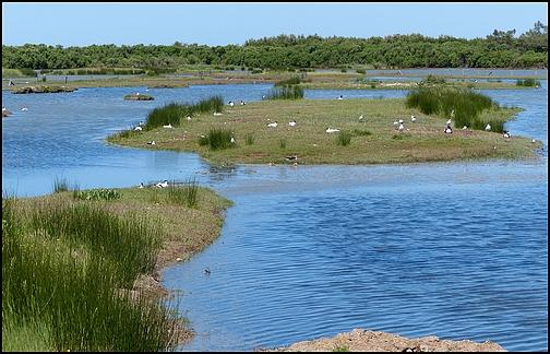 Réserve Ornithologique du Teich 1010