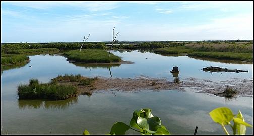 Réserve Ornithologique du Teich 1210