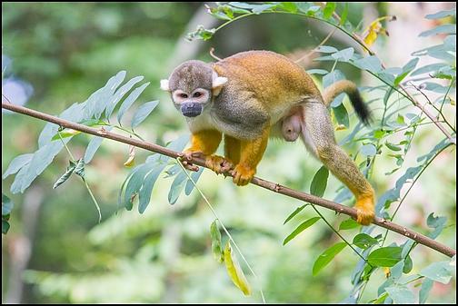 Reserve zoologique de Calviac 13_say10