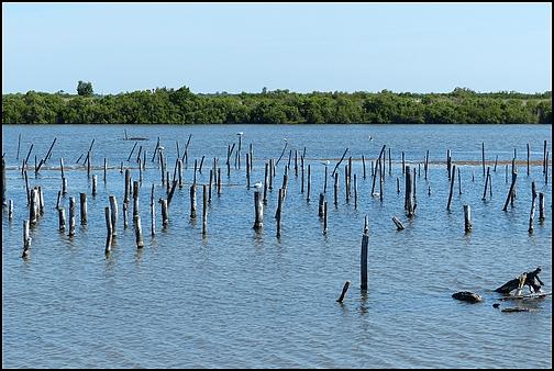Réserve Ornithologique du Teich 210