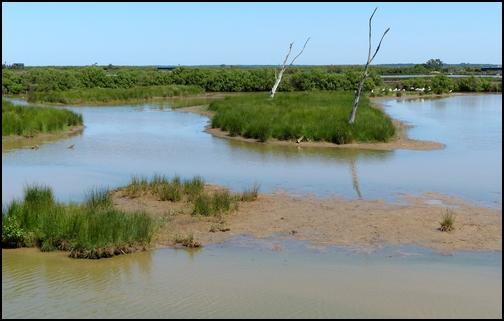 Réserve Ornithologique du Teich 410