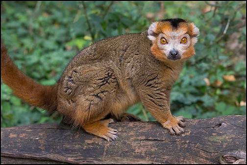 Reserve zoologique de Calviac Img_4010