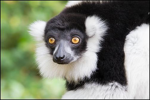 Reserve zoologique de Calviac Img_4012