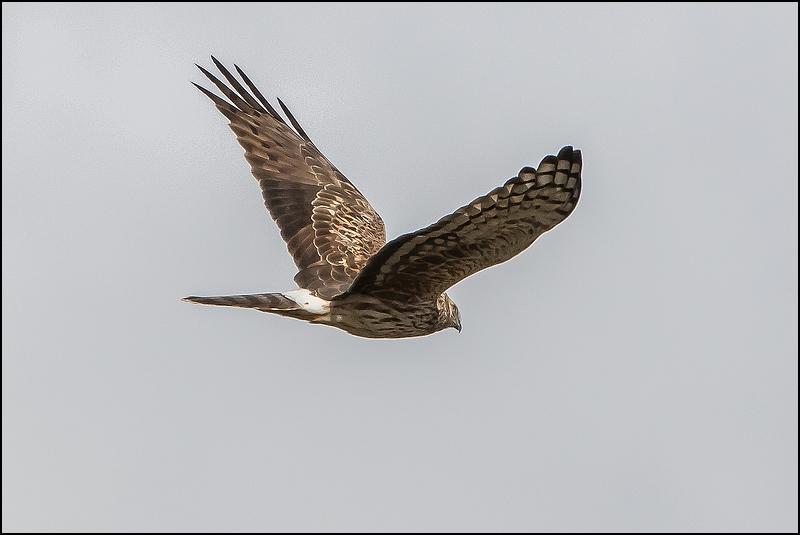 Réserve ornithologique du Teich (27 février 2015) Img_7013