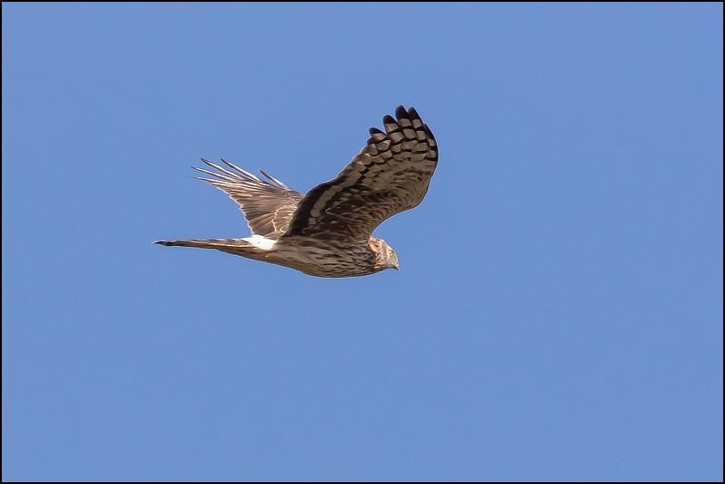 Réserve ornithologique du Teich (27 février 2015) Img_7014