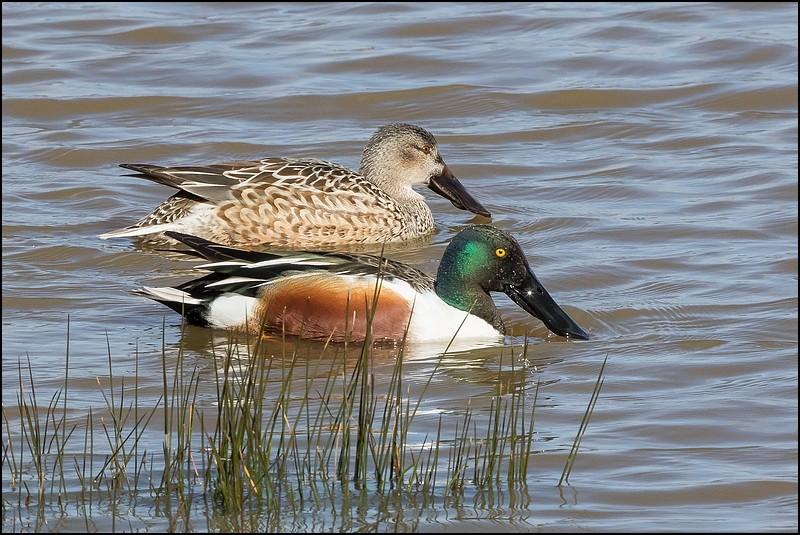 Réserve ornithologique du Teich (27 février 2015) Img_7015