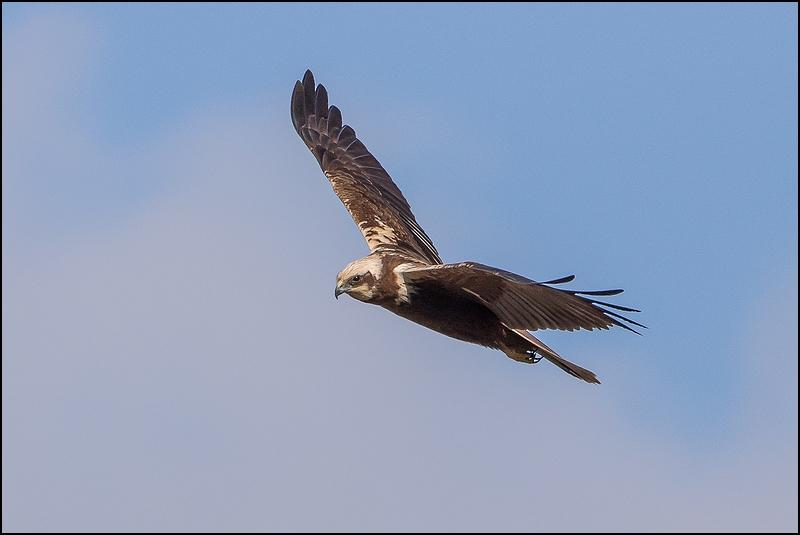 Réserve ornithologique du Teich (27 février 2015) Img_7114