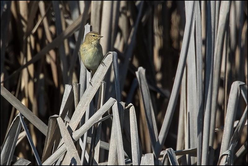 Balade au bord d'une gravière de Dordogne Img_7311