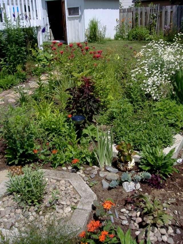 tanacetum jackpot de fleur de peau 3enens10