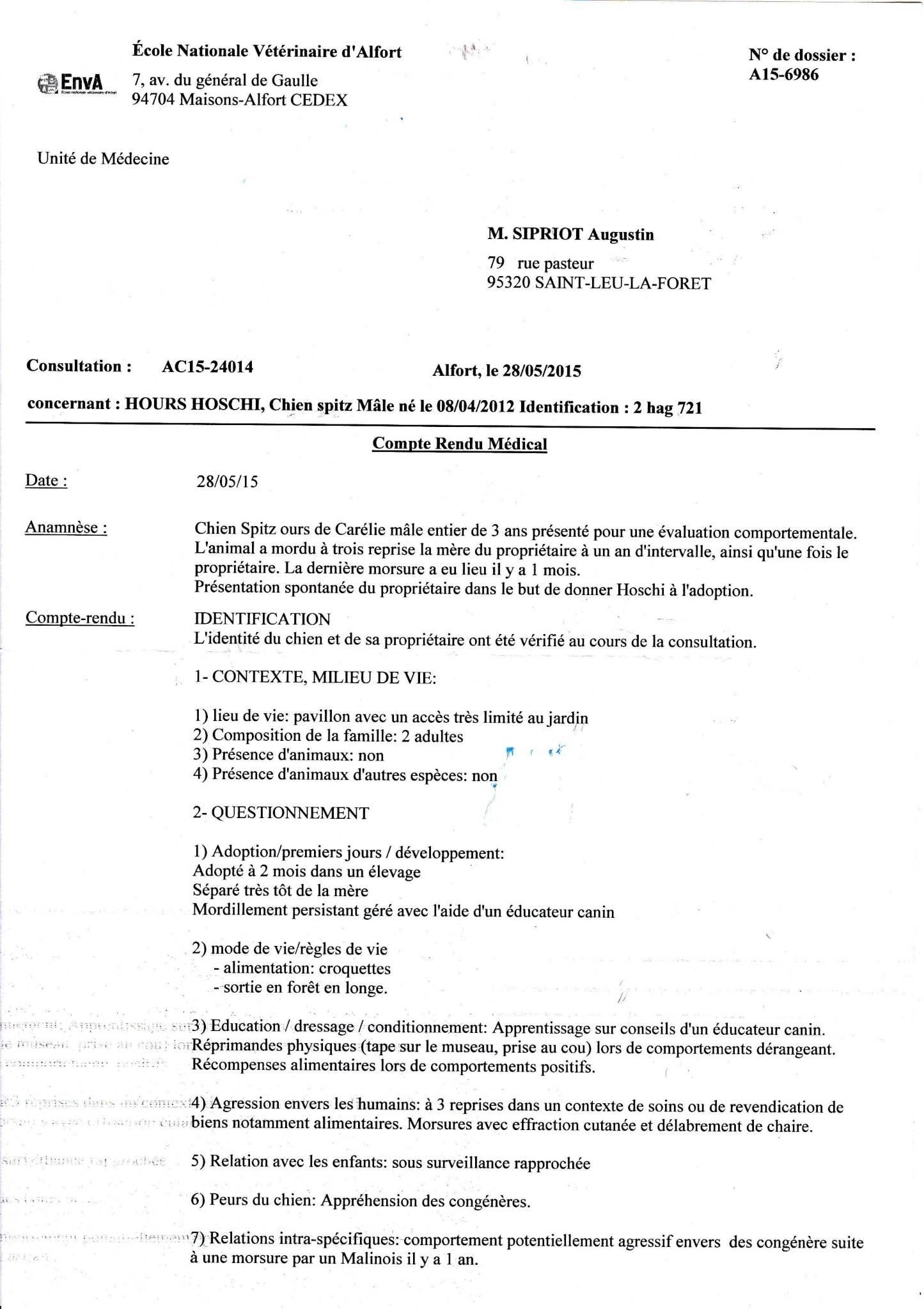 Urgent Hoshi Chien d'ours de Carelie 3 ans pas de chats PART95 Sans_t10