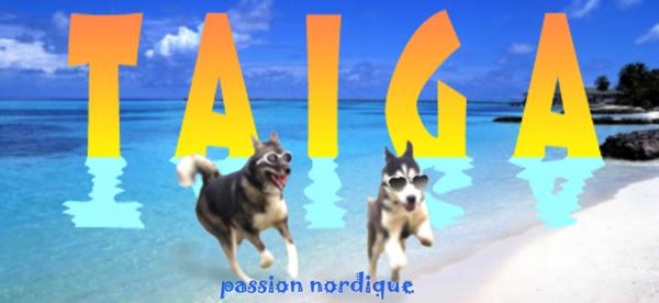 Une bannière pour l'été !! Taiga-11