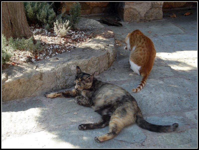 LES METEORES Chats_10