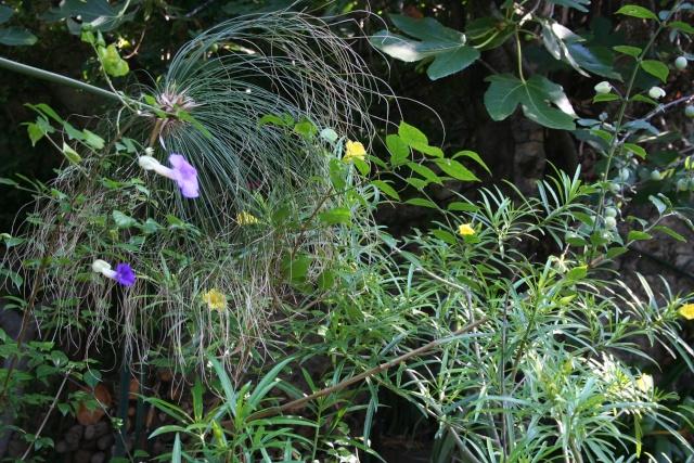 Et d'autres fleurs, colorées, cette fois Au_des10