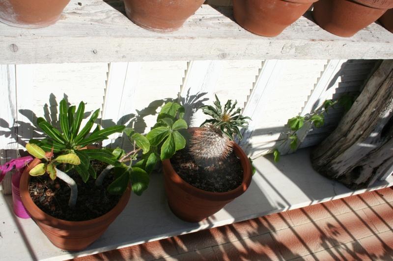 Tour de jardin en ce début septembre Cyphos12