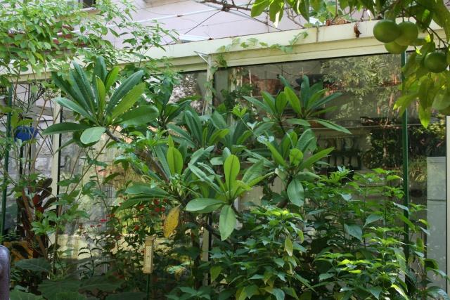 Tour de jardin en ce début septembre Plumer11