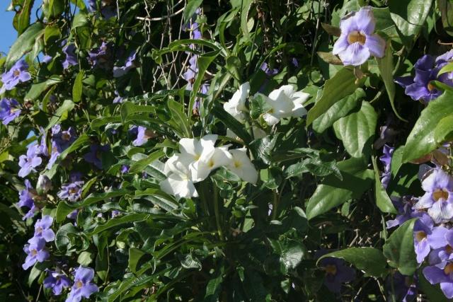 Tour de jardin en ce début septembre Plumer12