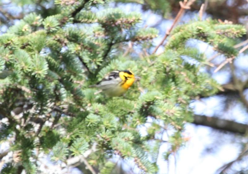 aide pour petit oiseau avec du jaune Img_0223