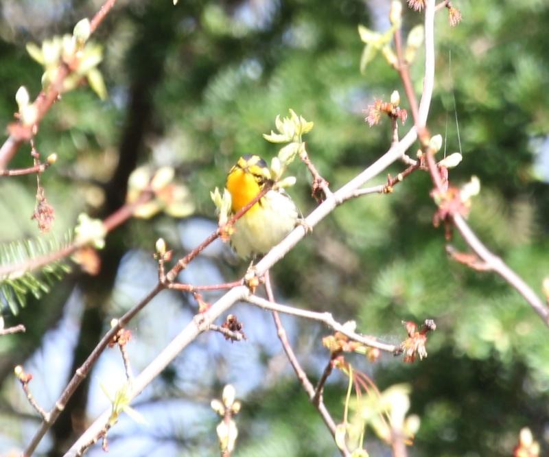 aide pour petit oiseau avec du jaune Img_0224