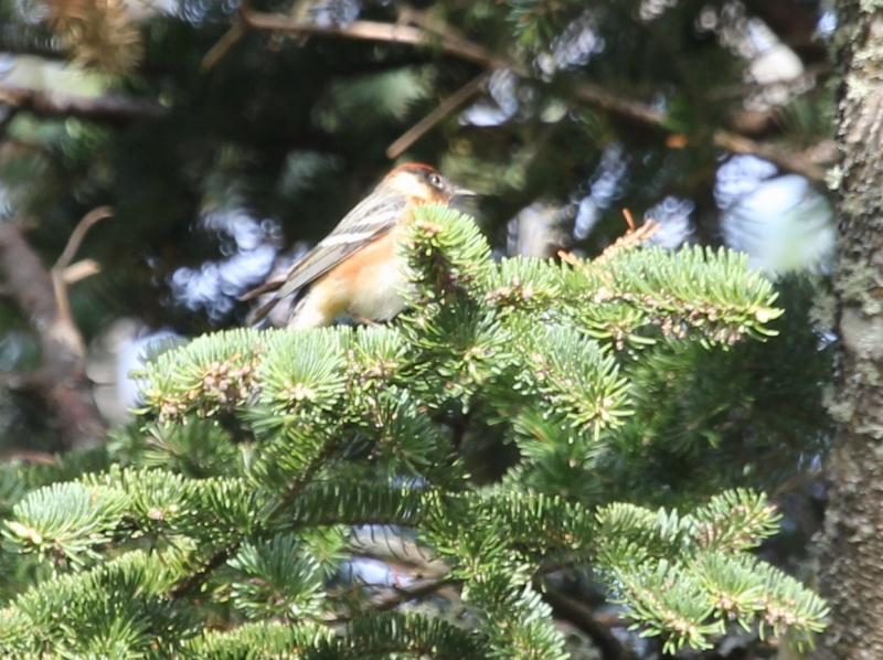 aide pour petit oiseau avec du jaune Img_0225