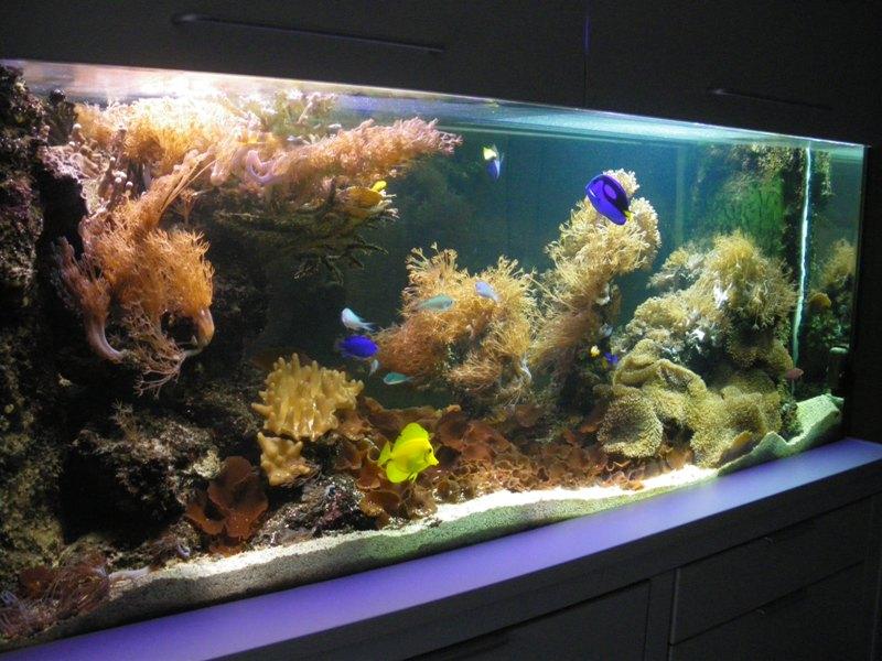 aquarium 650 litres Claire10