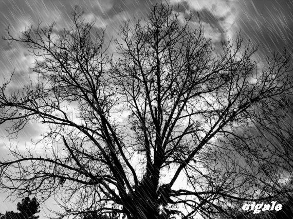 Les arbres en général - Page 2 9nq1q610