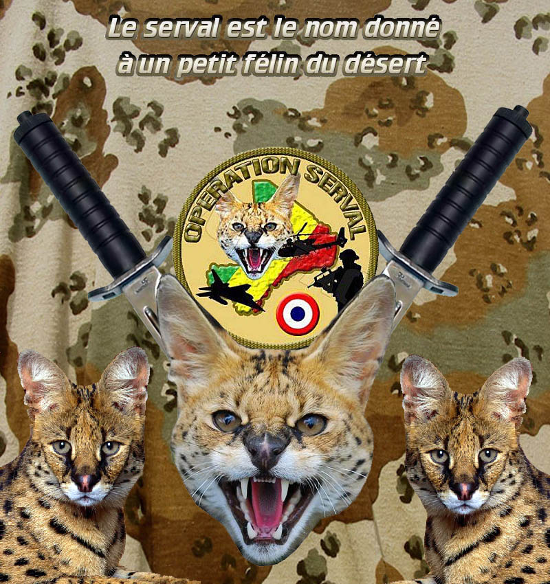 HOMMAGE A L'ARMEE FRANCAISE D'AFRIQUE DES OPEX au moment où un lobby médiatique tente de la dénigrer par des propos nauséabonds
