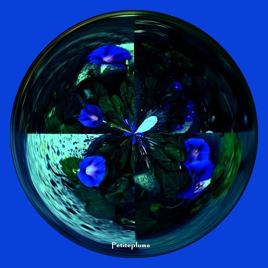Les liserons bleus C8942010