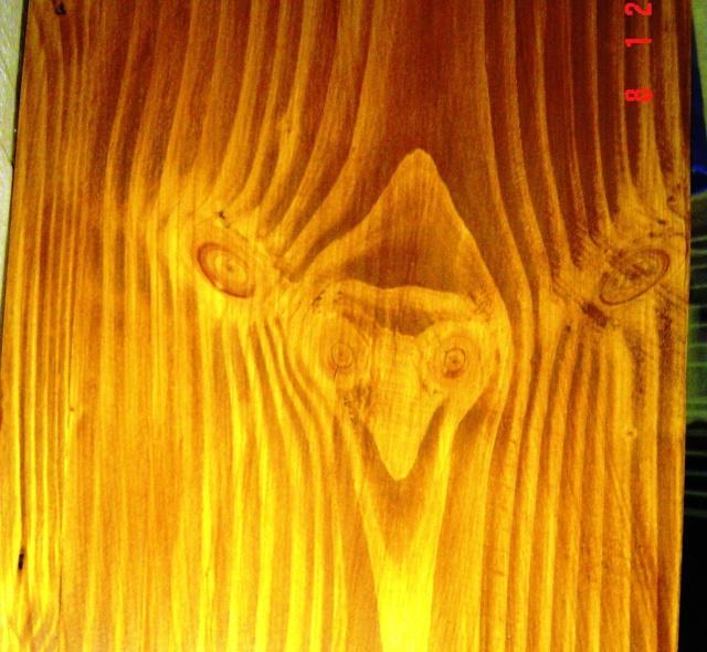 Le bois qui nous observe Bois_t13