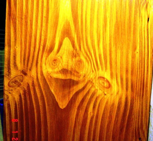 Le bois qui nous observe Bois_t14